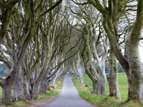 The Dark Hedges - County Antrim