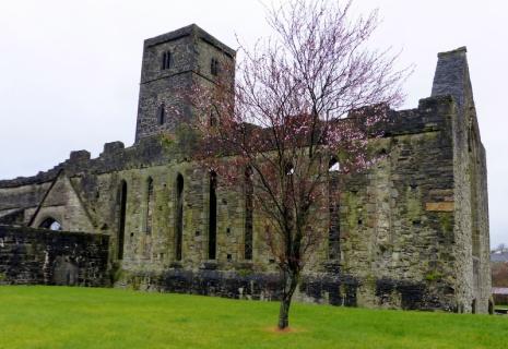 Sligo Abbey - Sligo