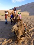 Bactrian camels at Khongoryn Els sand dunes