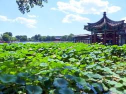 Qianhai Lake